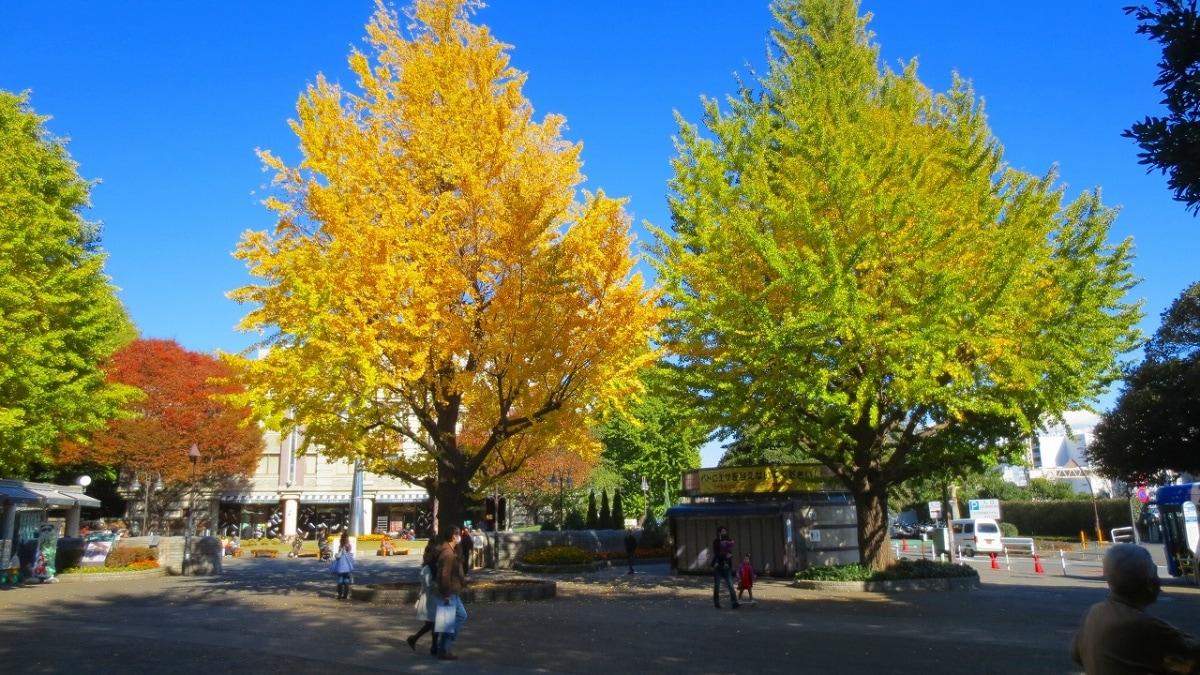 5. Ueno Park