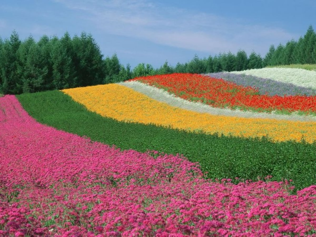Japan S Top 3 Flower Parks All About Japan