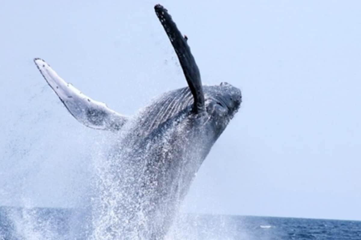 1. Whale Watching Cruises
