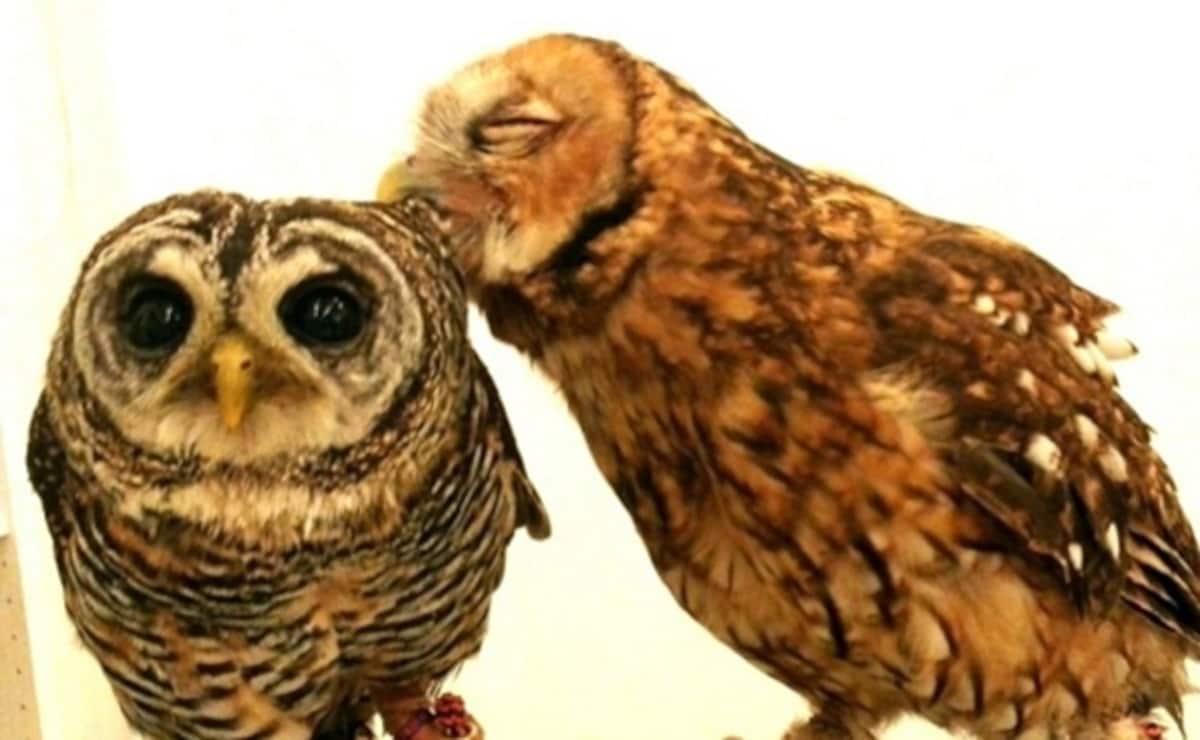 Owl Family Osaka (Tenjinbashi)