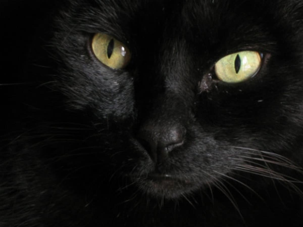 '네코메' (고양이 눈)
