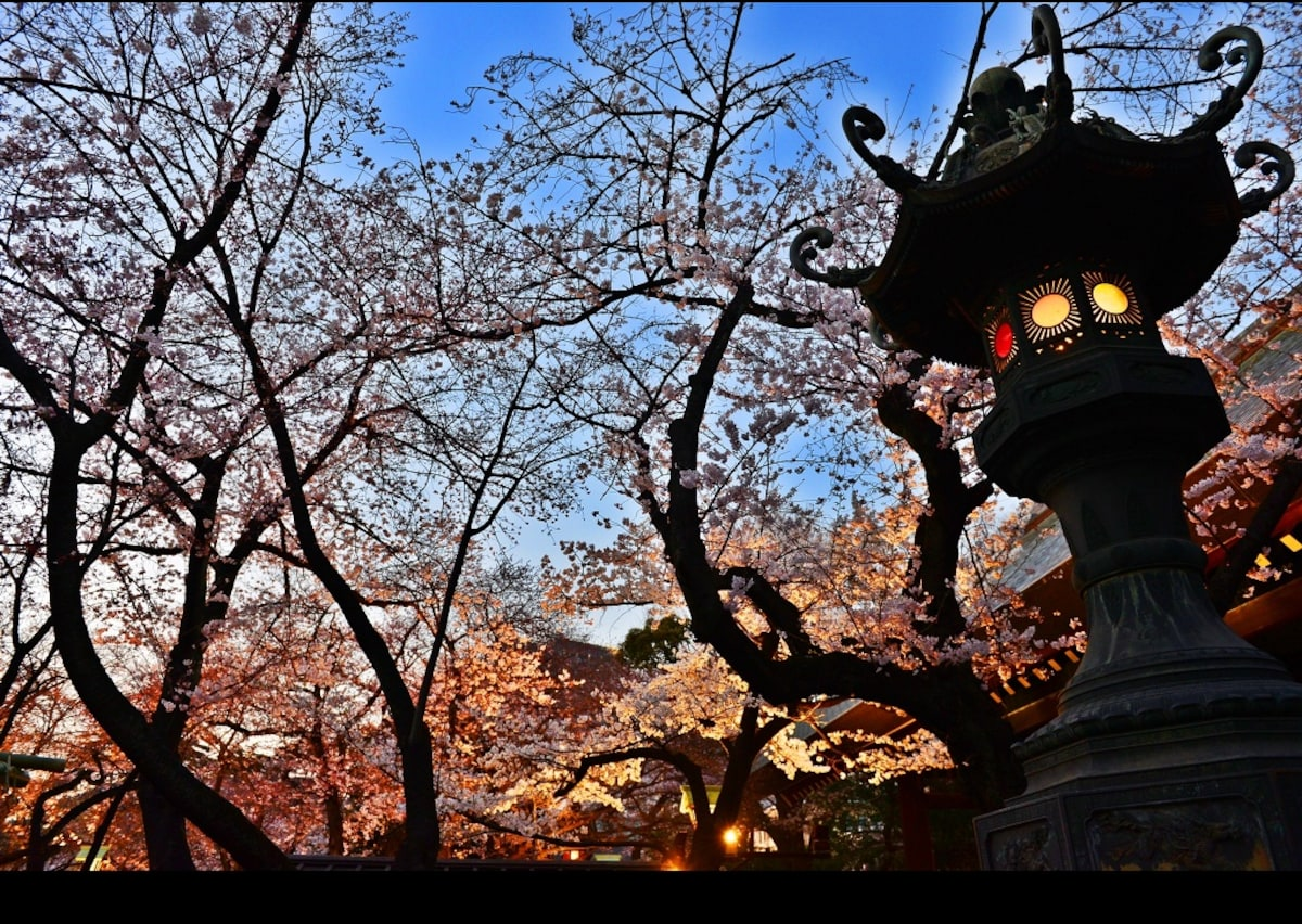 8. ศาลเจ้า Yasukuni (เขต Chiyoda)