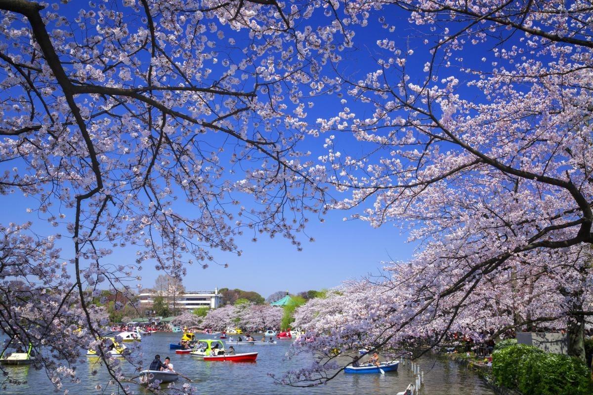 【東京】淺草寺周邊