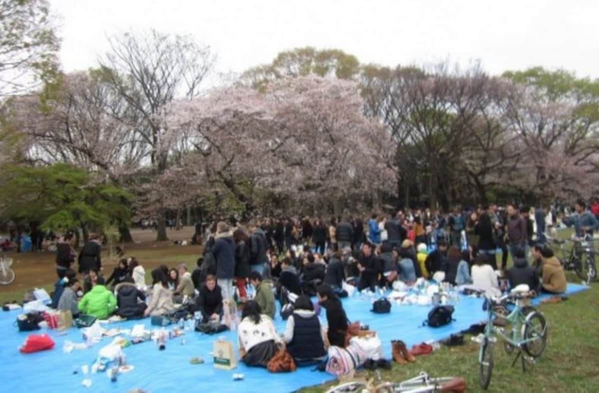 1. It's literally half of the nation getting drunk while sitting under blossoming cherry trees