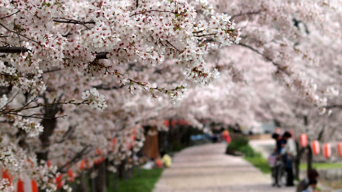 1. When to Hanami
