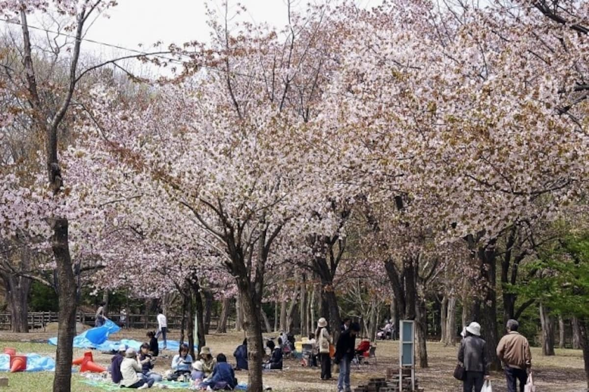1. Maruyama Park & Hokkaido-jingu Shrine