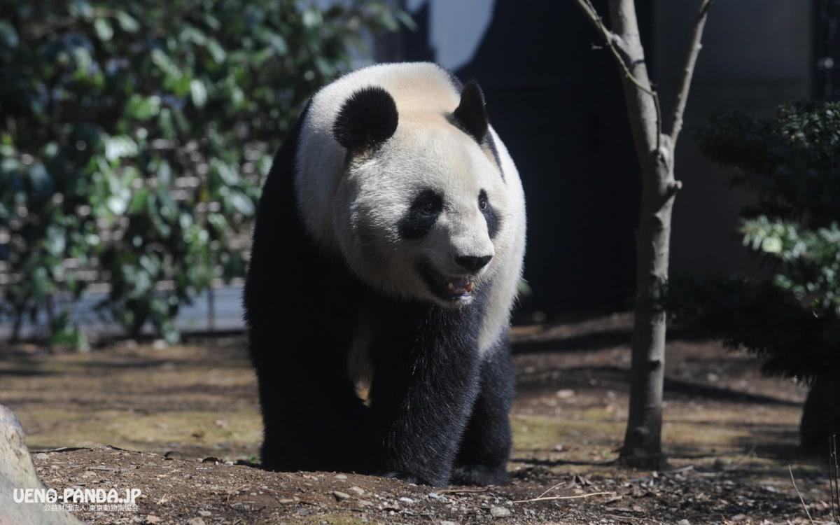 1. 우에노 동물원