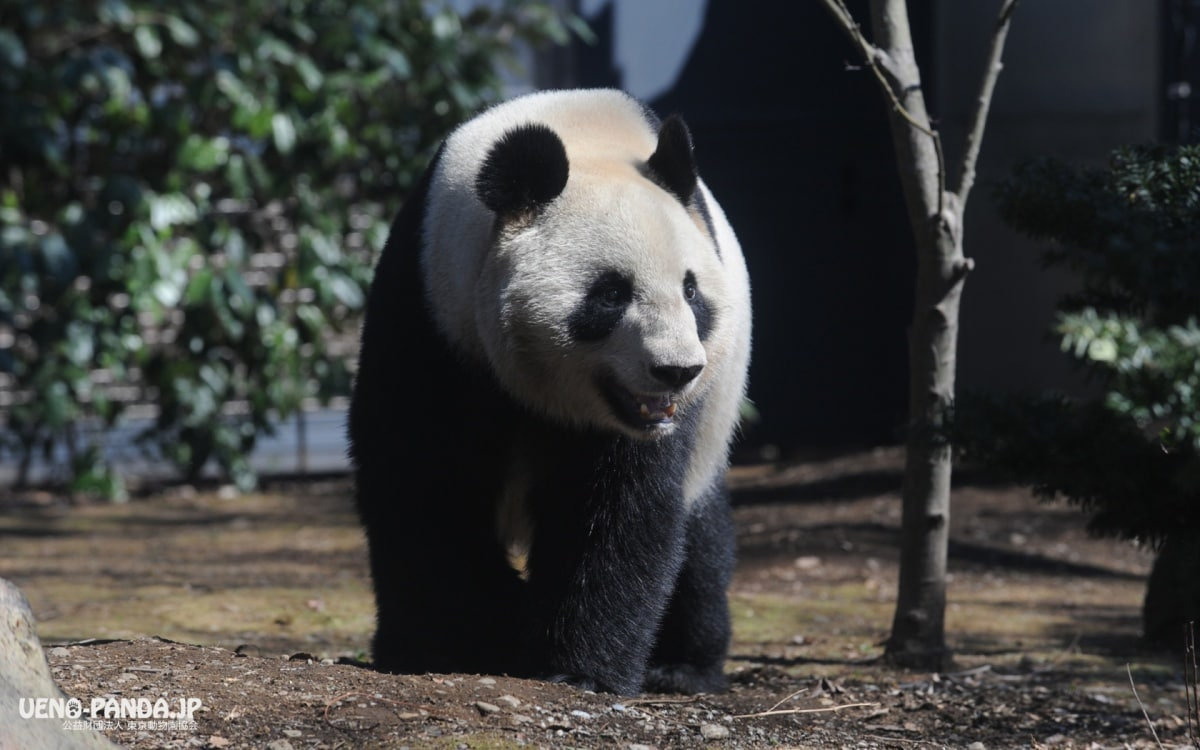 1. Ueno Zoo