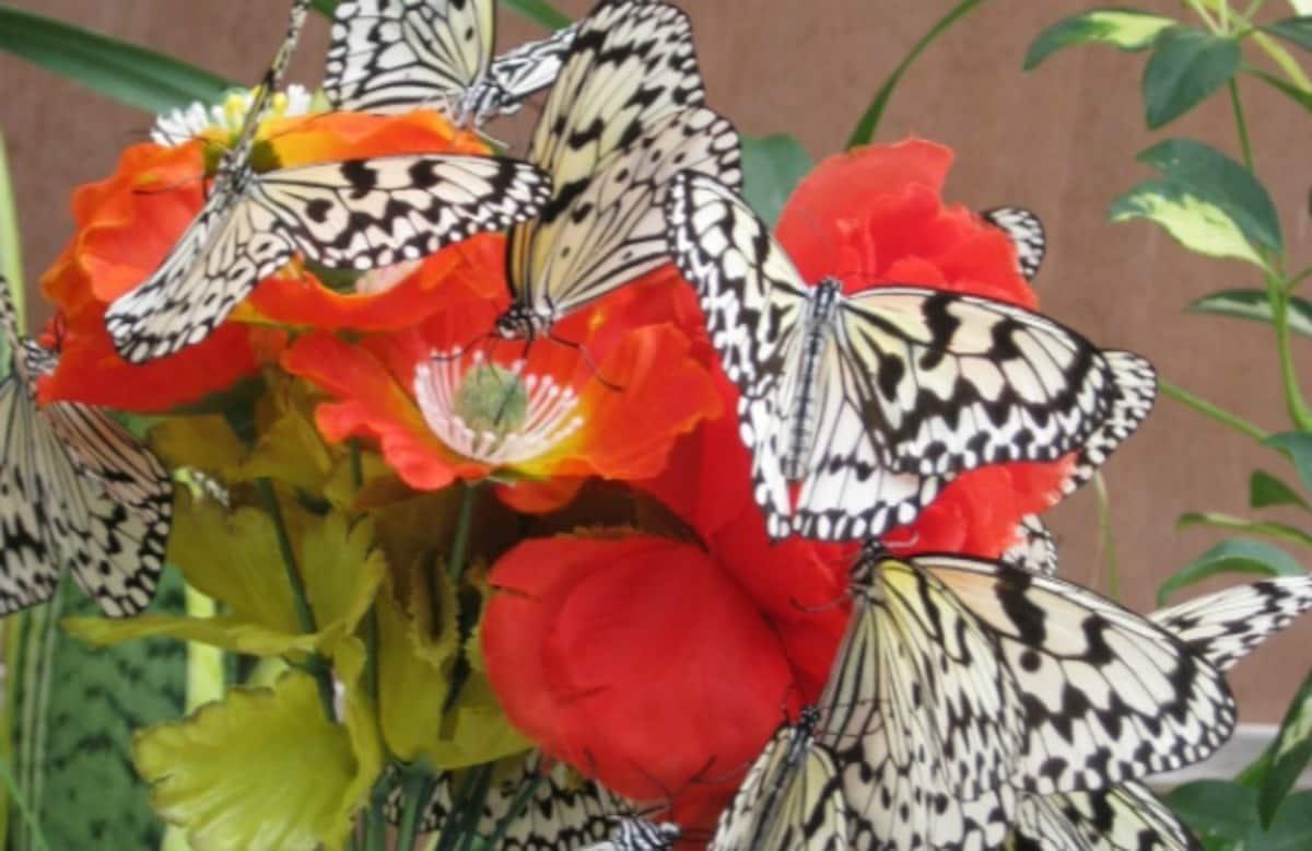 류구조 나비 정원