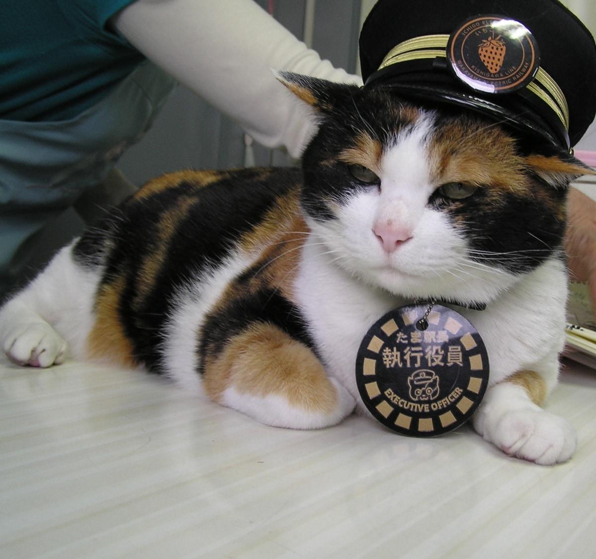 3. 和歌山的貓站長