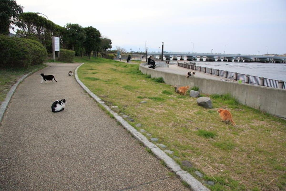 1. Enoshima (Kanagawa)