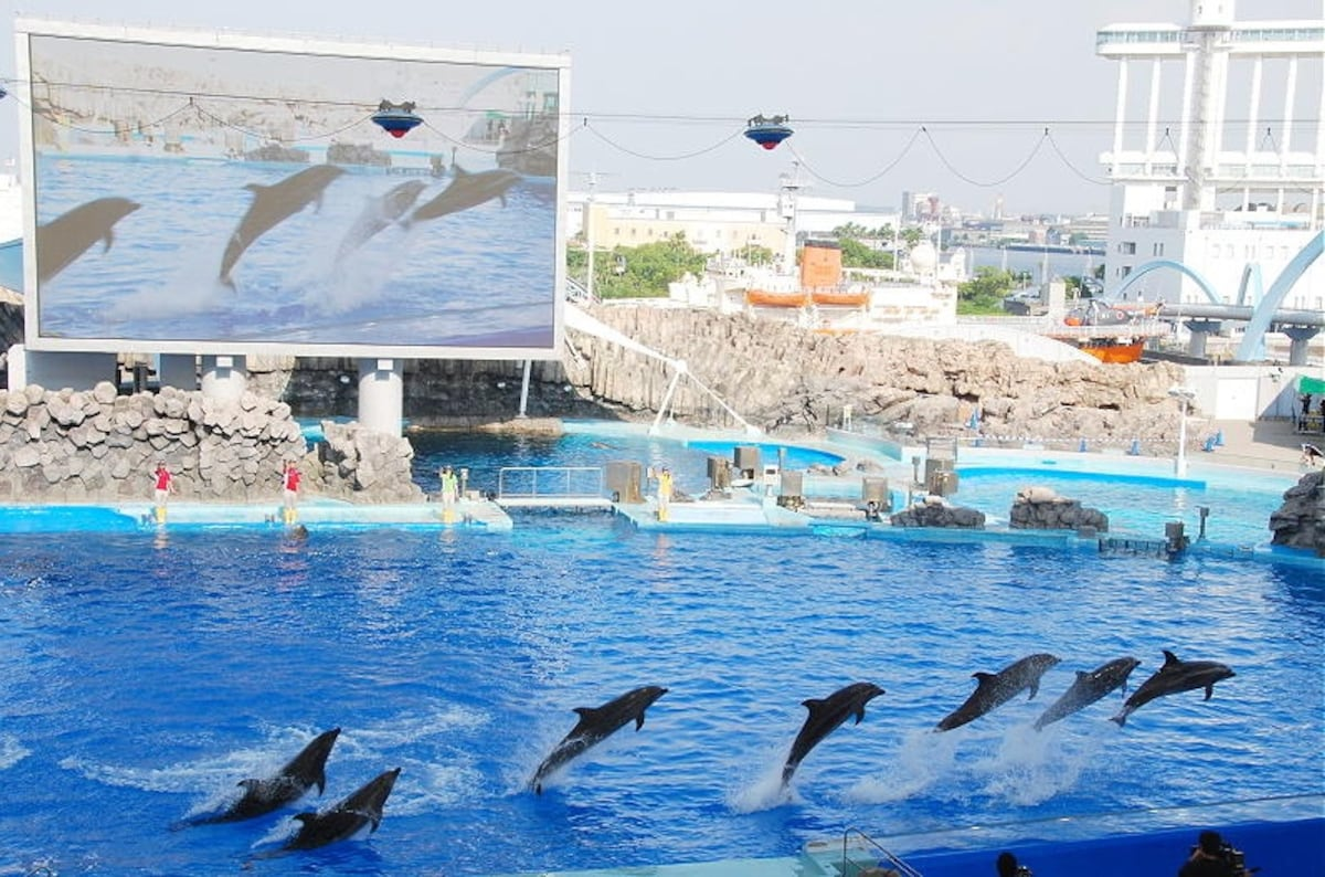 10. Port of Nagoya Public Aquarium (Aichi)