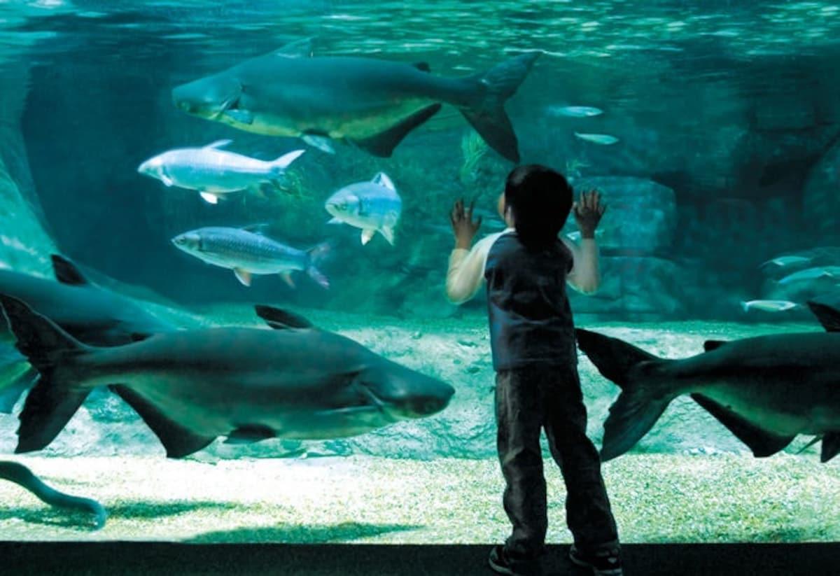 4. Suma Aqualife Park (Hyogo)