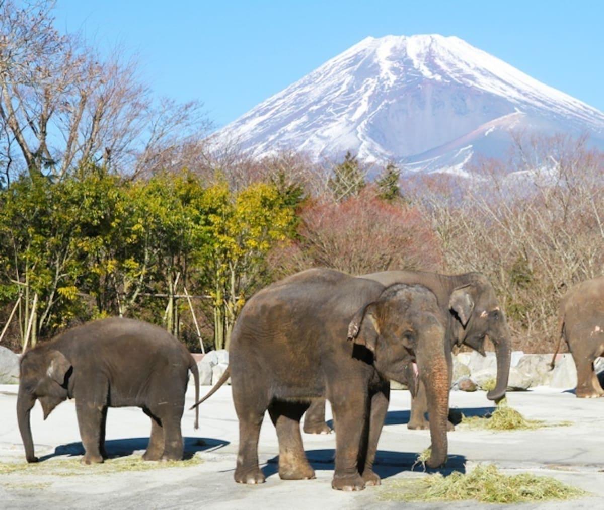 5. Go to a Zoo, Aquarium or Safari Park
