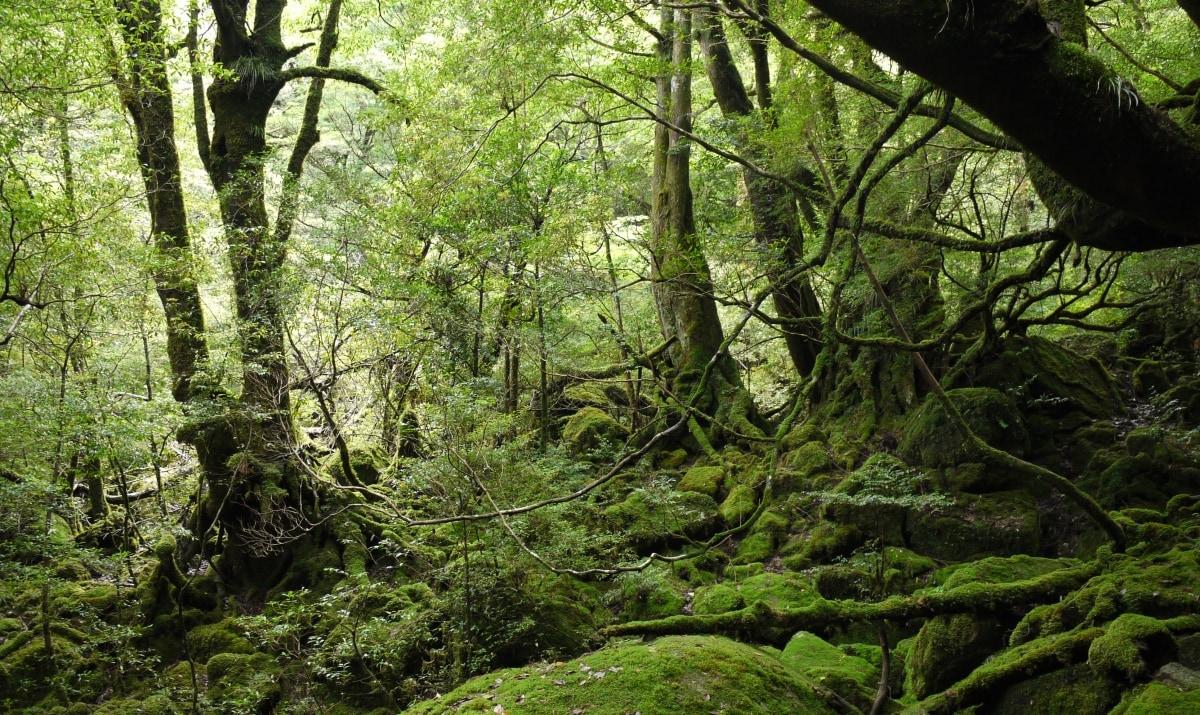 15. Pristine Forests of Famed Yakushima (Kagoshima)