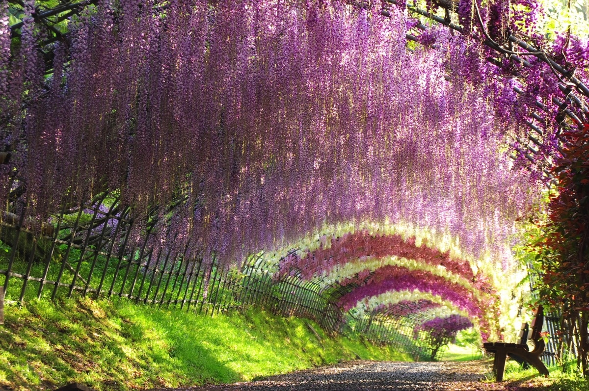 9 Gorgeous Out-of-the-Way Spots in Kyushu | All About Japan