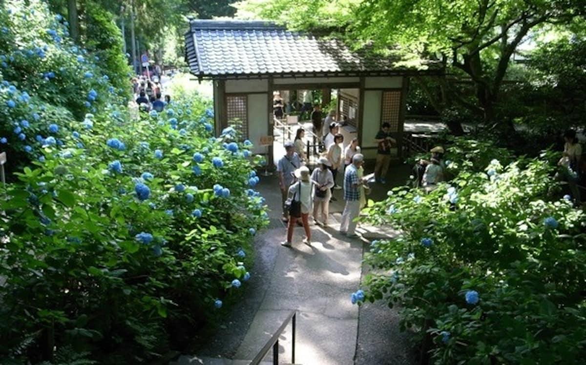Meigetsu-in Blue