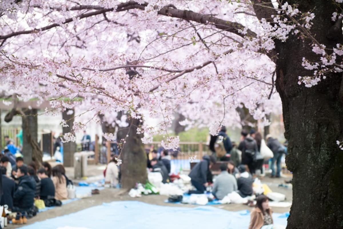 Image result for hanami festival