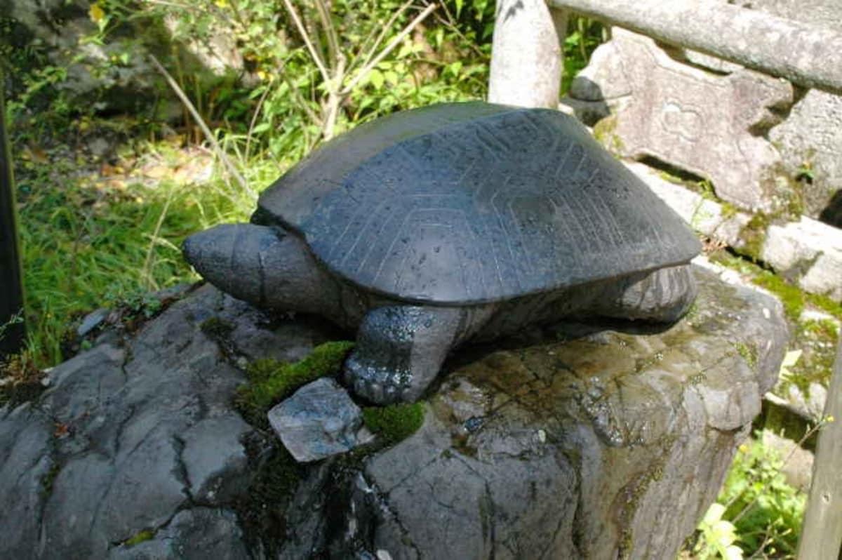 เต่าในศาลเจ้า Matsunoo Taisha