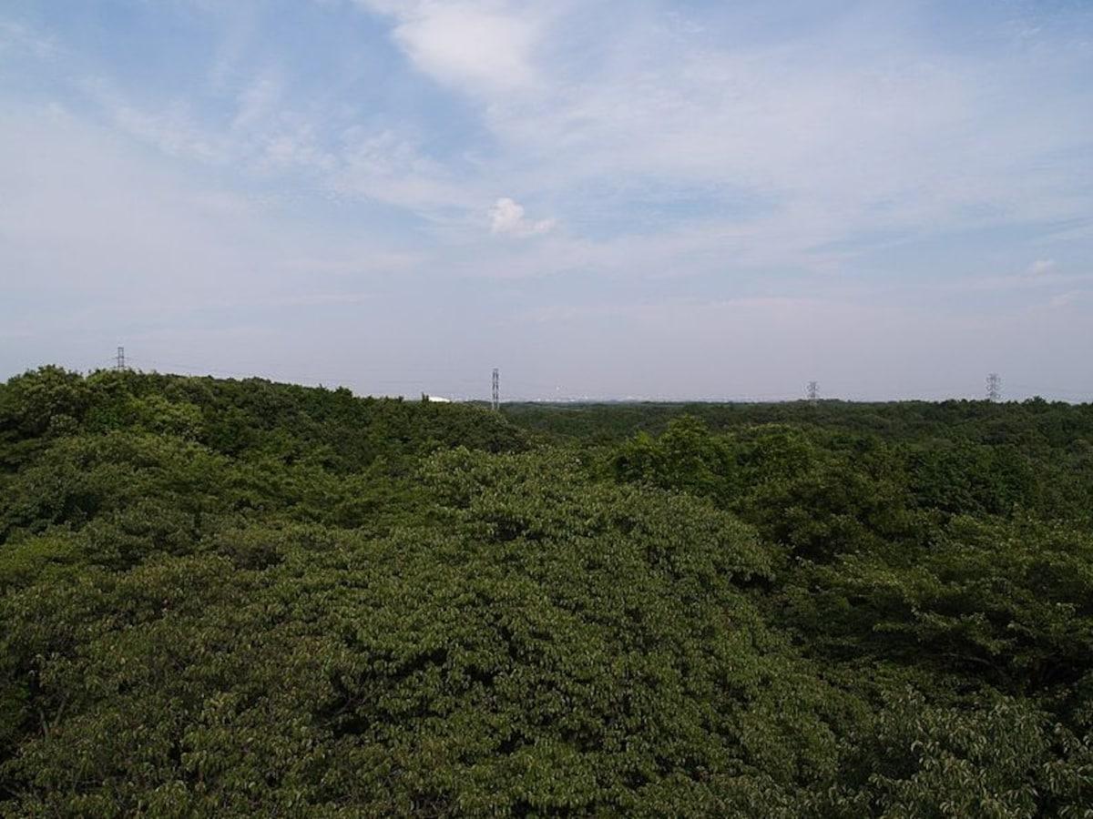 3. My Neighbor Totoro: Sayama Hills (Tokyo)