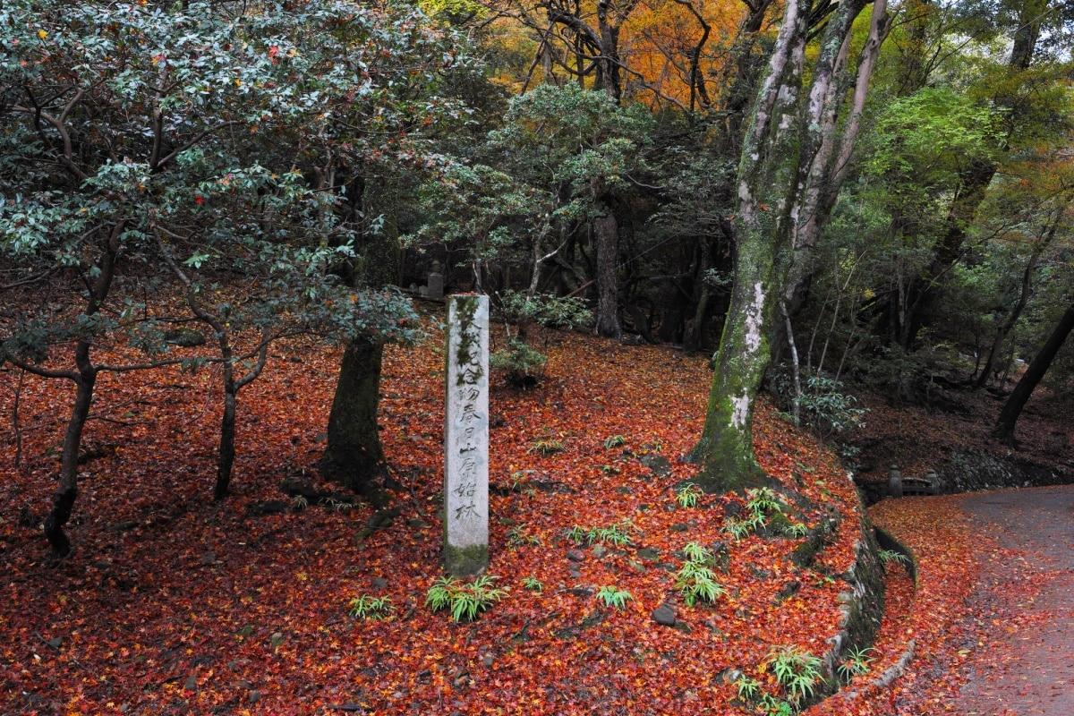 8. Kasugayama Primeval Forest
