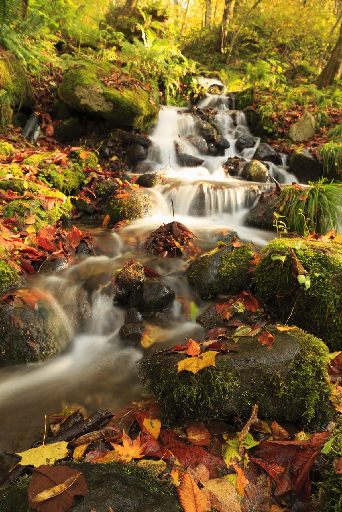 7. ลำธารโออิราเซะ (奥入瀬渓流) เมืองโทวาดะ