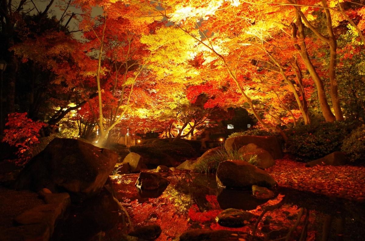 5. Otaguro Park (Ogikubo)