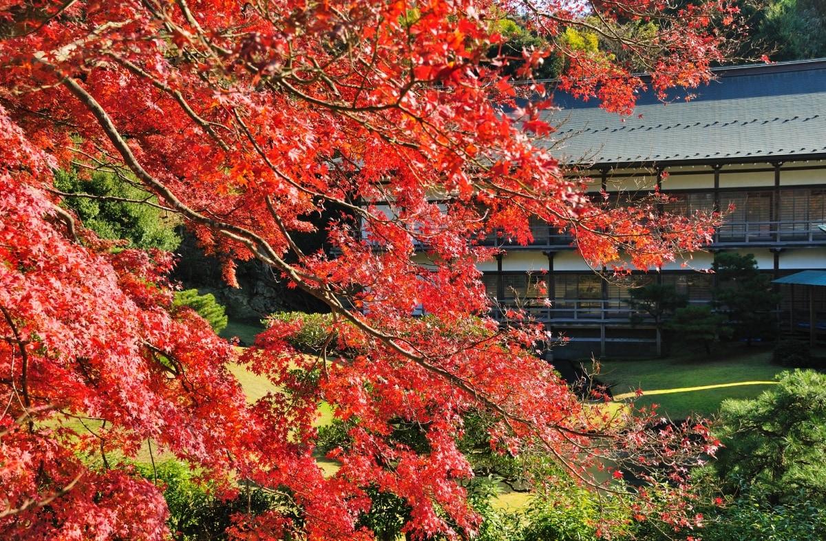 散發著幽幽寂靜的楓葉美景「建長寺」