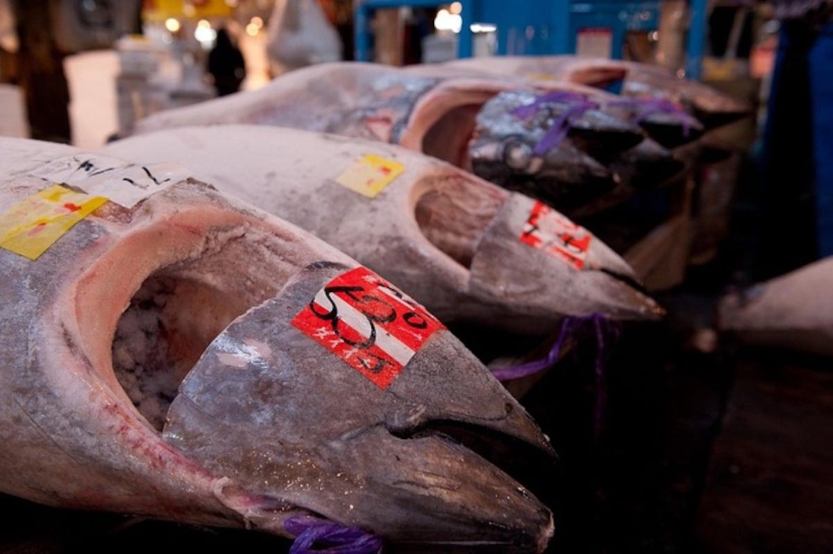 4. ตลาดปลาชิโอกามะ (塩釜仲卸市場) จังหวัดมิยางิ