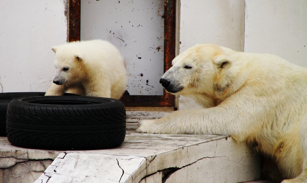 10. Sapporo Maruyama Zoo (Hokkaido)