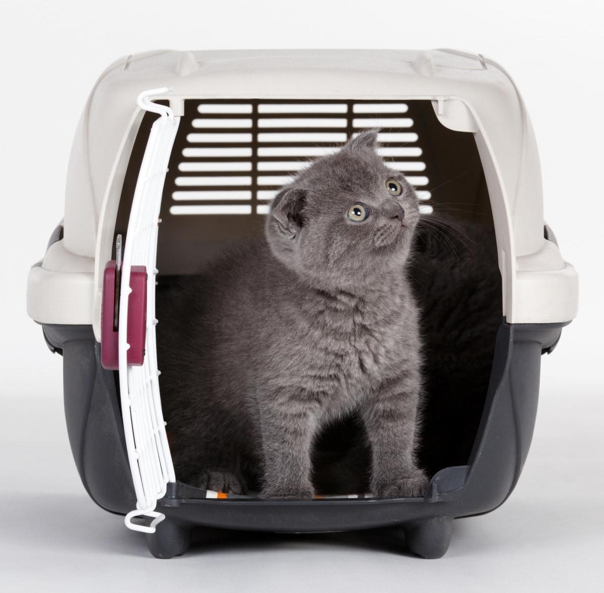 6. Choosing Your Pet's Method of Travel