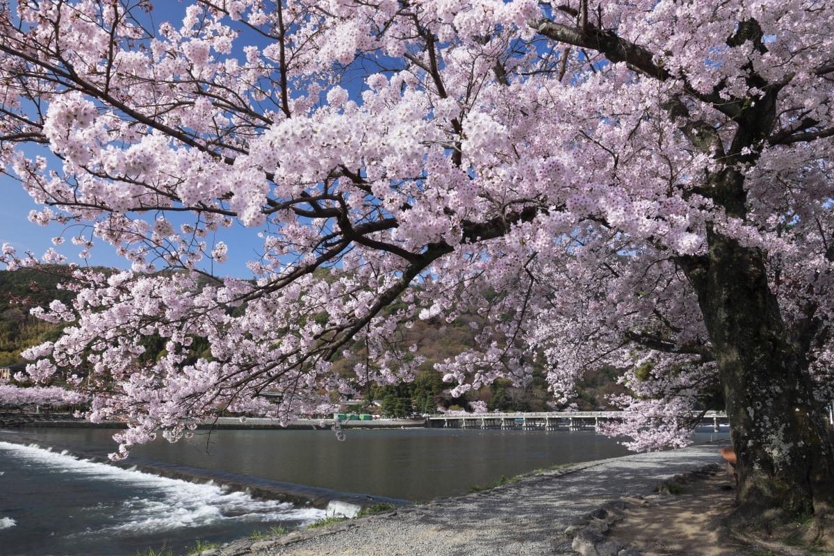 5. Arashiyama