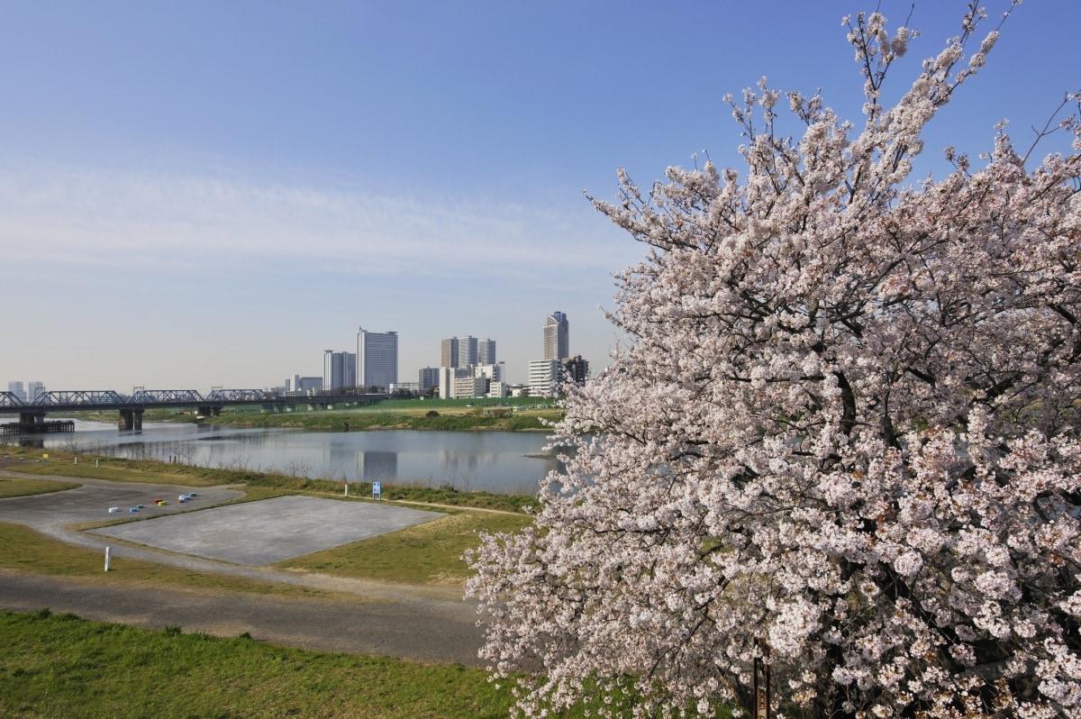 1. 多摩川ガス桥绿地 (东京都大田区)