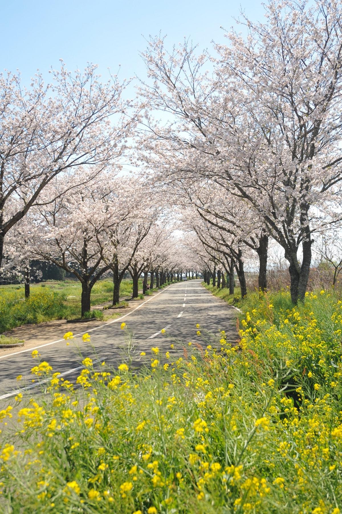6. Tarumi/Darumizu Park (Miyazaki)