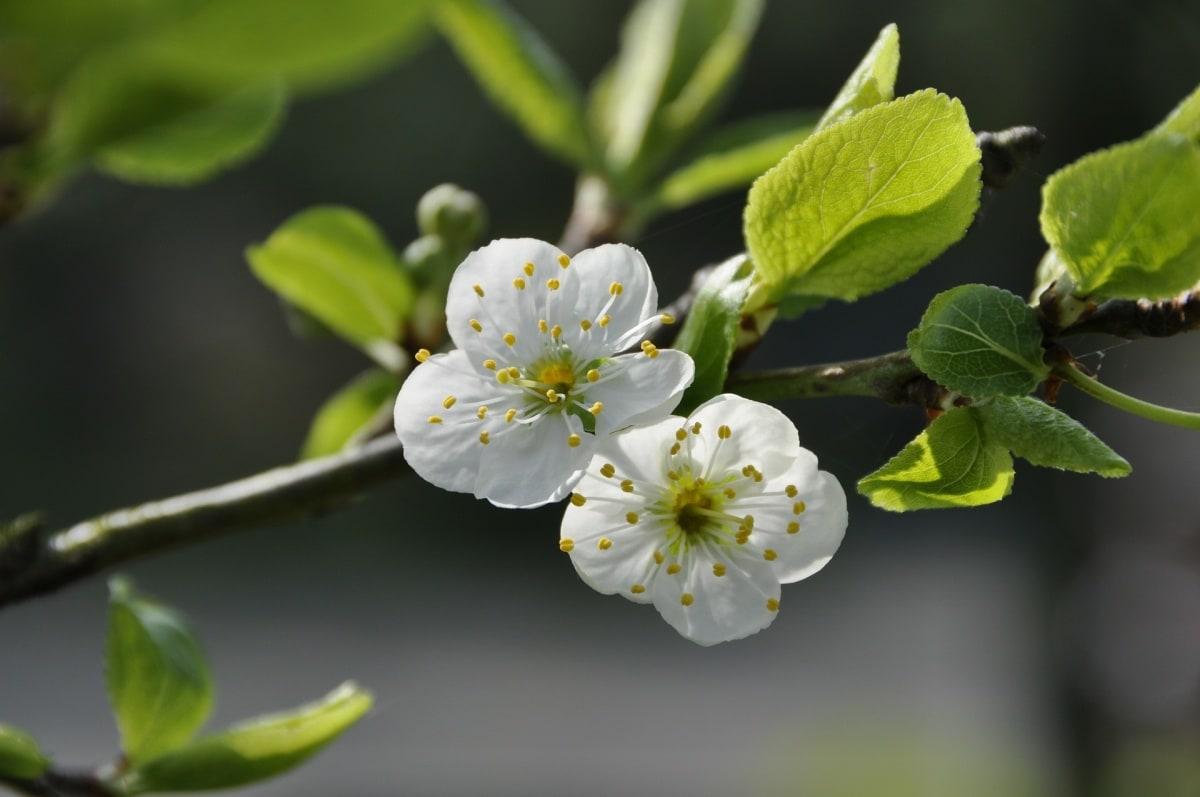 1. 꽃잎