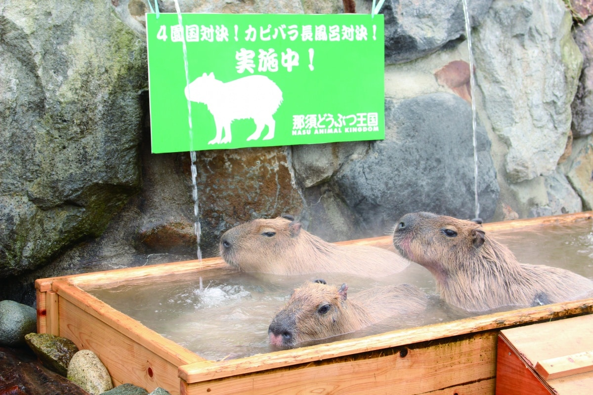 Nasu Animal Kingdom