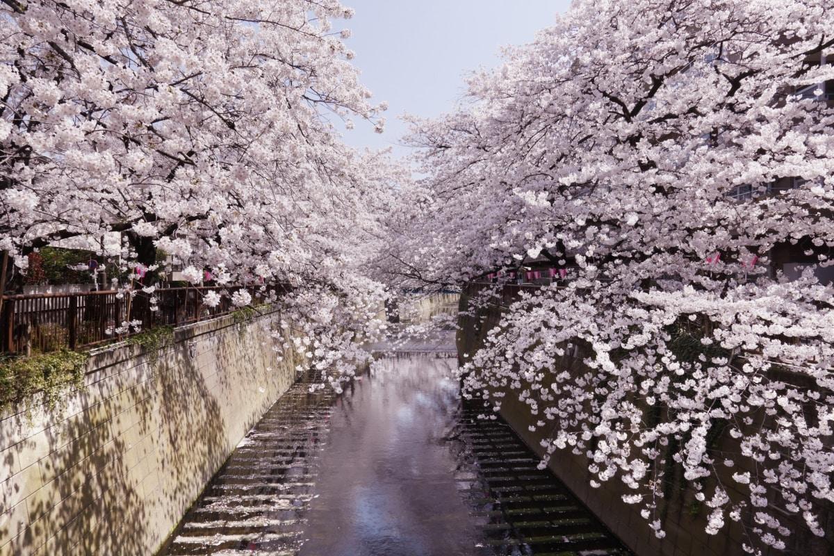 ฤดูใบไม้ผลิ ( Haru)