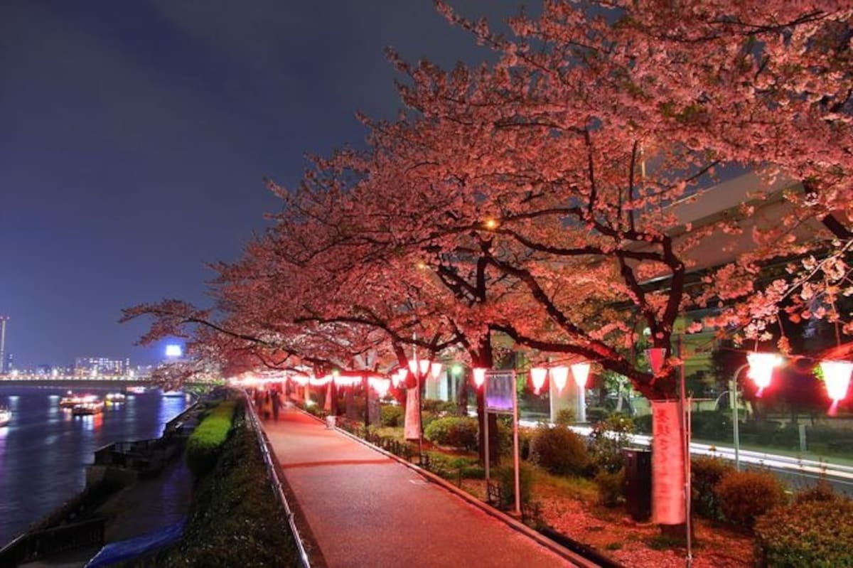 1. Night time Sakura watching at Sumida Park