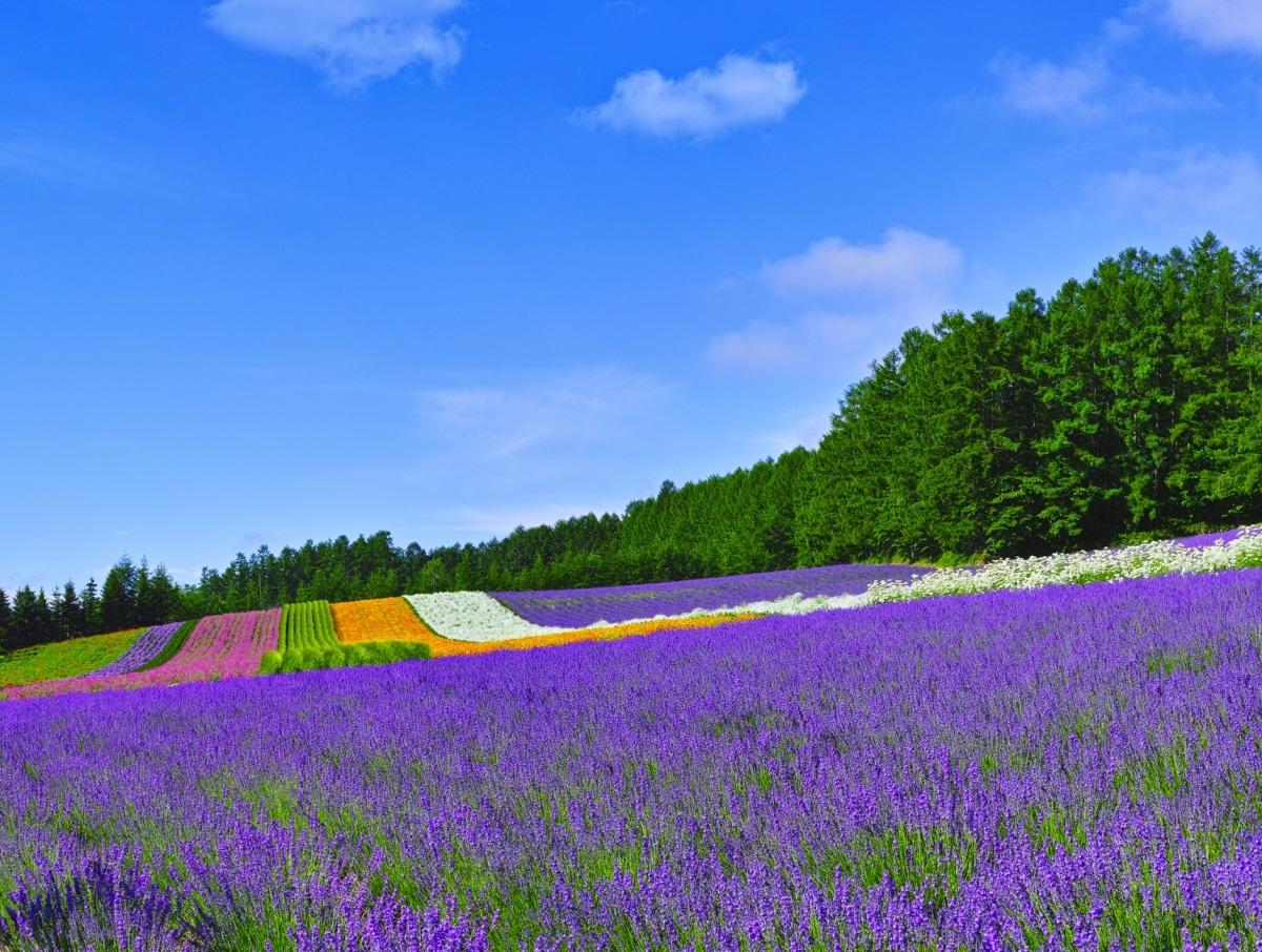 July — Farm Tomita