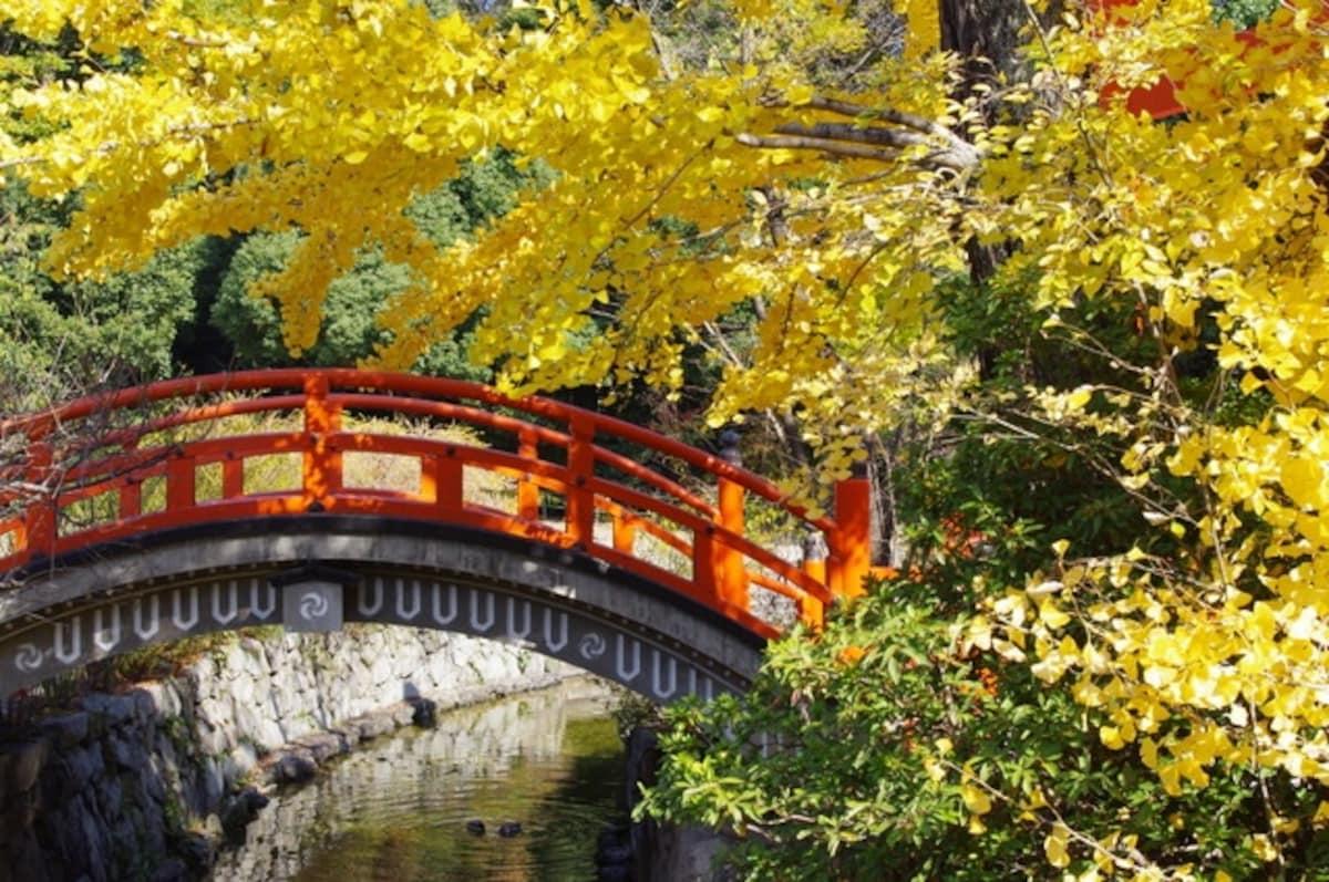 獲得好人緣與美貌的能量景點|下鴨神社