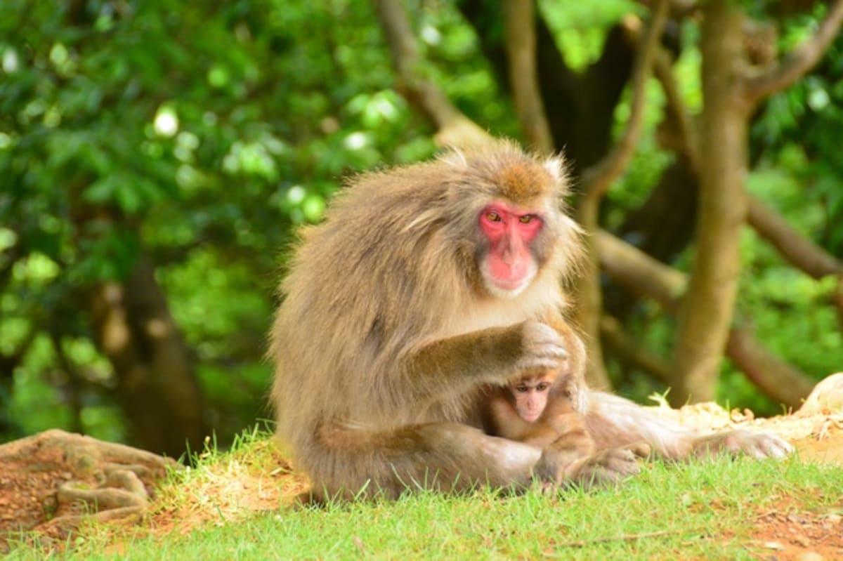第一次親密接觸|嵐山岩田山猴子公園