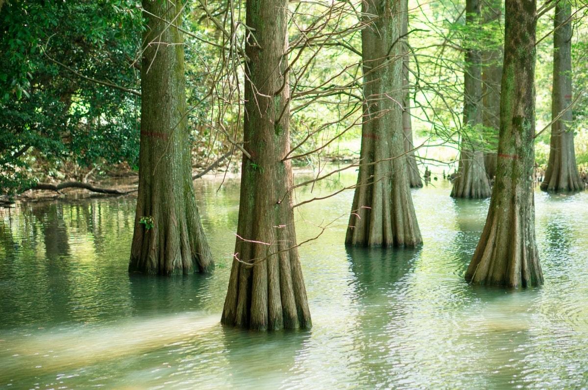 ■ 奇幻森林之旅 — 筱栗九大之森