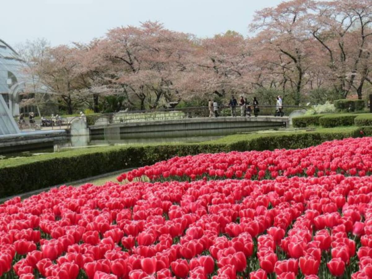 14. Appreciate the beauty of nature at Kyoto Botanical Garden