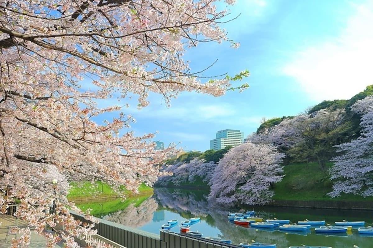■ 东京赏樱推荐景点1:千鸟之渊