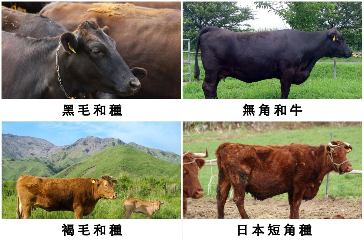究竟「和牛」是什么?