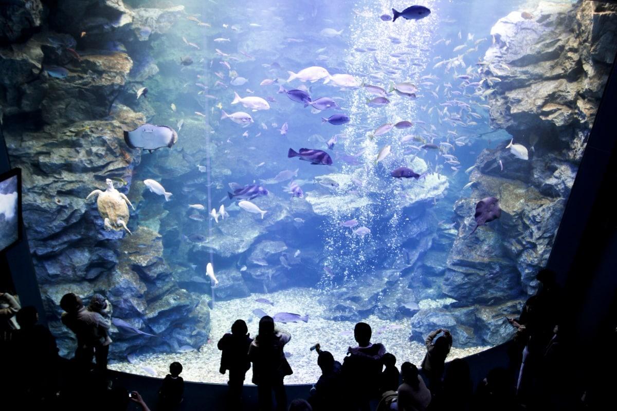 ▍京都親子景點1:日本最大的內陸型水族館・京都水族館