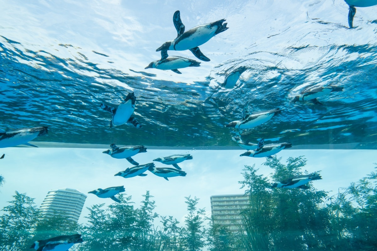 1. Sunshine Aquarium พิพิธภัณฑ์สัตว์น้ำกลางอากาศ