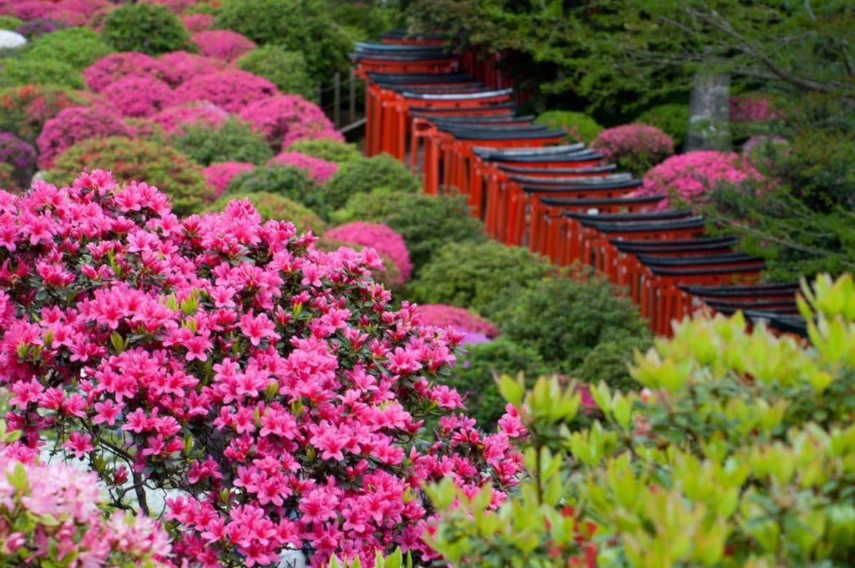 1. เทศกาลดอกสึสึจิ ณ ศาลเจ้า Nezu