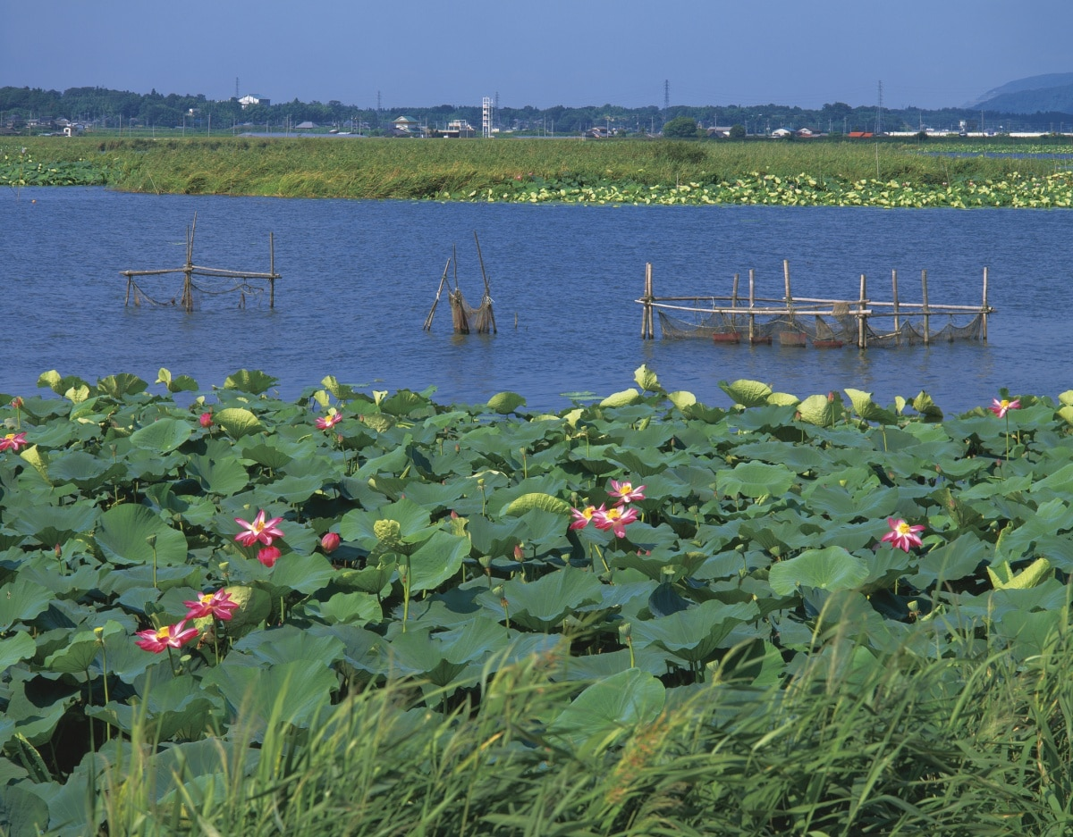 กำนันฆ่าคนไทยด้วยกัน ริมทะเลสาบคาซึมิงาอุรา