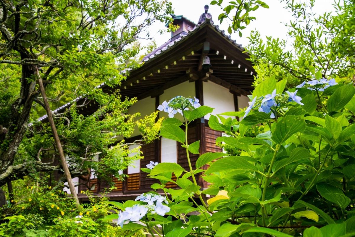 紫陽花種類最多的花之寺│光則寺